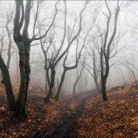 Таинственный лес :: Георгий Ланчевский