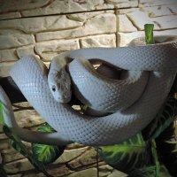 Ещё раз, о рептилиях....2 :: Viacheslav Birukov