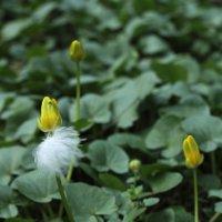 Желтый с белым :: Эдуард Цветков