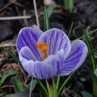 весна :: andru