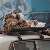 Забытая машинка.. Забытый тигренок.. :: Павел Голубев