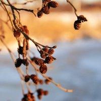 Тёплое солнышко :: Juliya Fokina