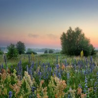 Нежное утро среди трав :: Юлия Холодкова