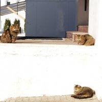 Мартовские коты :: Нелли *
