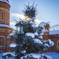 зимнее солнце :: Альбина Еликова
