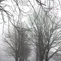 Туманное утро. :: Анна Кравченко