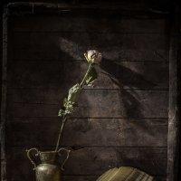 про розу :: Evgeny Kornienko