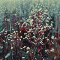 Серия. Полевые цветы :: ainur gainutdinov