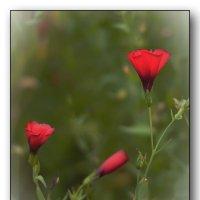 минимализм цветов :: gribushko грибушко Николай