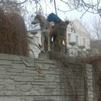 Крым бывает разный. :: Александр Ваильев
