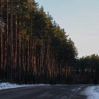 Под мартовским солнцем... :: Любовь Анищенко