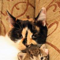 Самое приятное в кошке - любовь к комфорту. (Камптон Маккензи) :: Яна Гоголь