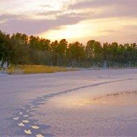 Следы на озере :: Валерий Талашов