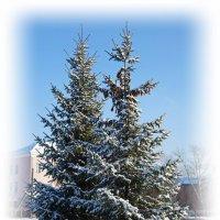 Парный портрет на фоне зимы. :: Владимир Михайлович Дадочкин