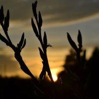 Закат, окончание рабочего дня кого-то) :: Стасия П.