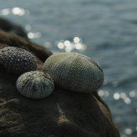 Морской натюрморт :: Жанетта Буланкина