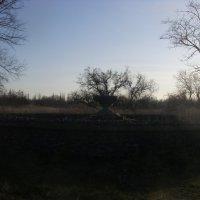заброшенный фонтан :: Ирина Красникова-Дашкова