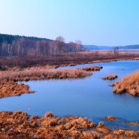 Дикая природа :: dimakoshelev Кошелев