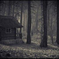 В лесу... :: Елена Баскакова