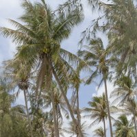 тайская деревня :: Борис