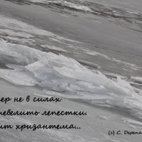 Волжский триптих. Хризантема. :: Светлана Дерепащук