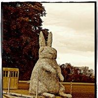кролики предпочитают спаржу :: Александр Корчемный
