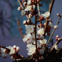 Novruz :: Санар Мамедов