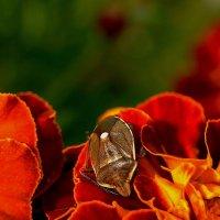 нектар любят все :: gribushko грибушко Николай