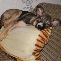 Гера спит, она устала :: Елена Ефремова