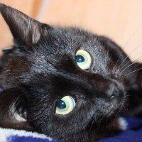 Кошка :: Надежда Алексеенко