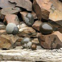 Время собирать камни :: Сергей Карцев