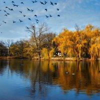 осень золотая... :: Юлия Густерина ...