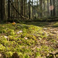 Лесной ковёр :: Олег Козлов