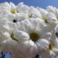 Белое облако :: Mariya laimite
