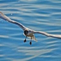 На озере :: Геннадий Коробков