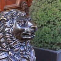 Новый петербургский лев. :: Александр Лейкум