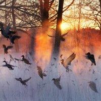 Пейзаж с утками :: Rimantas
