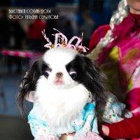 выставка собак :: Татьяна Семёнова