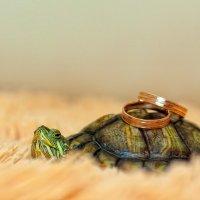Черепаховая свадьба! :: Ксения Пугачева