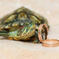 Черепаховая свадьба 2 :: Ксения Пугачева