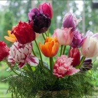 Тюльпаны :: Ольга Дядченко