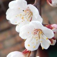 цветочки :: Дарья Неживая