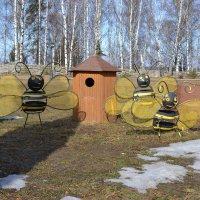 Дикие пчёлы :: Sergey Волков