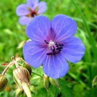 Природой красота дана...  Как восхитительна она!!! :: Надежда Млат