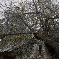 Проклятый старый дом:) :: Марина Сеньшина