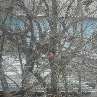 Зима на юге. :: Александр Ваильев