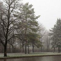 это не ЧБ, это погода сейчас такая мерзкая :: Вячеслав Филиппов