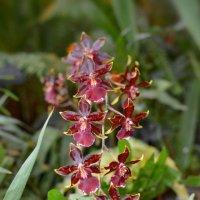 Орхидеи. :: Ольга