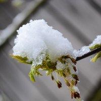 Зима вернулась :: Валерий Ткаченко