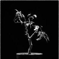 Маленькое дерево :: Михаил Онипенко